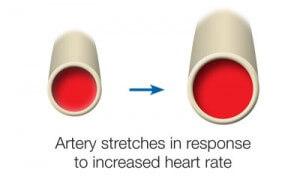 healthy_artery